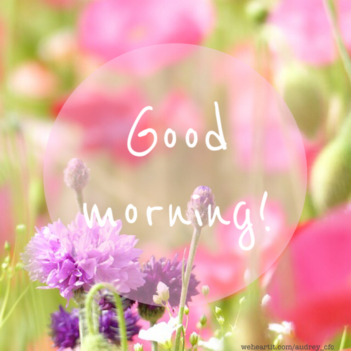 """Good Morning!"" Picture of flowers in a field. weheartit.com/audrey_cfc"