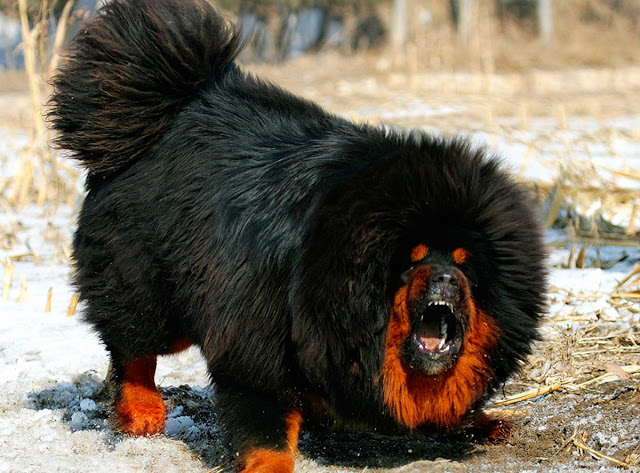 Most Exotic Breeds Of Dogs