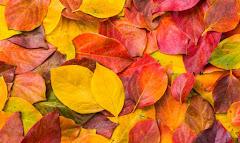 Autumn / Fall ...