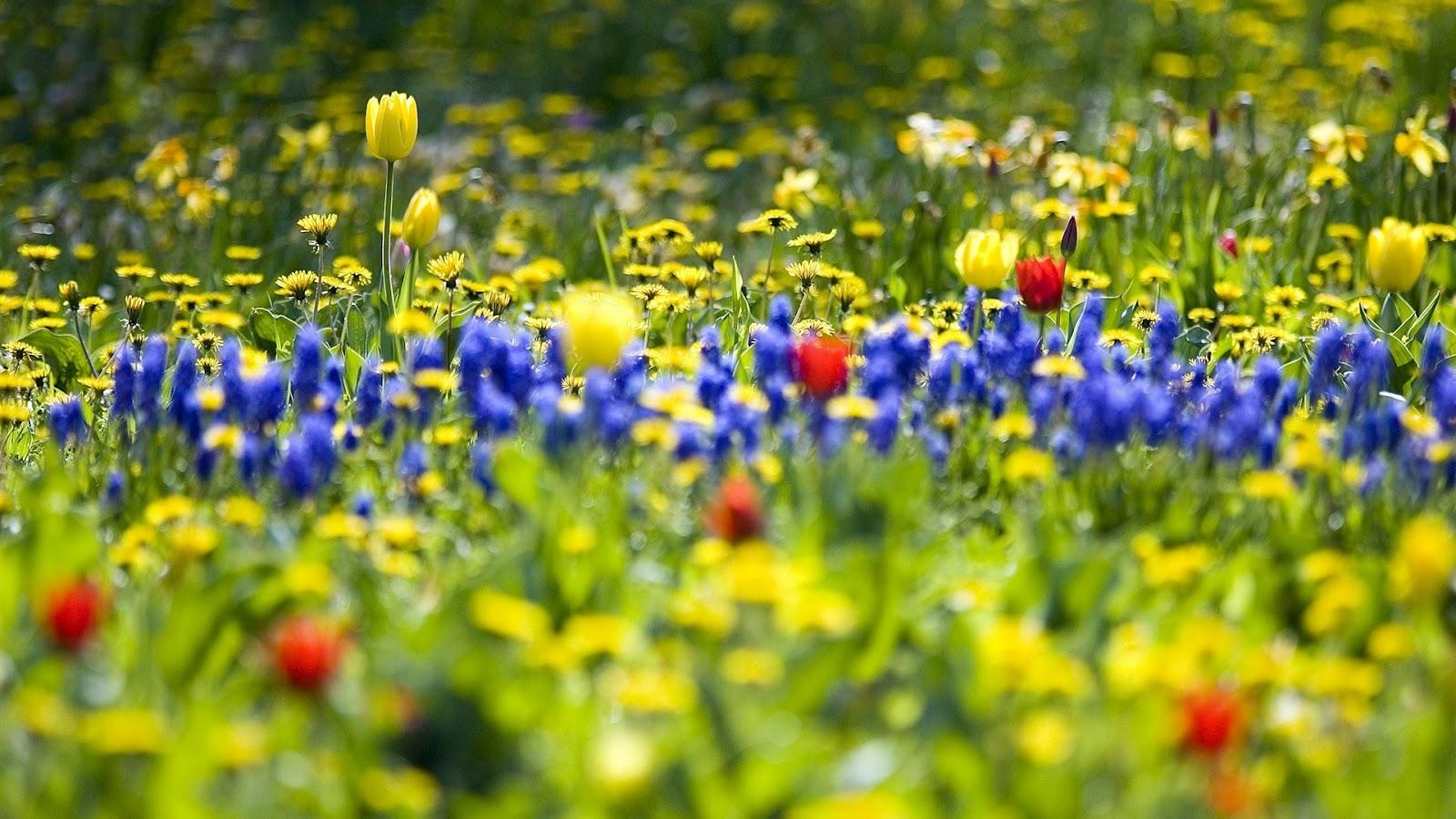 http://1.bp.blogspot.com/-CPY_g9uLfic/T9GXdTFaWTI/AAAAAAAAD-8/ZQjWKtAB7Lk/s1600/Bloom+Flower+Wallpaper+7.jpg