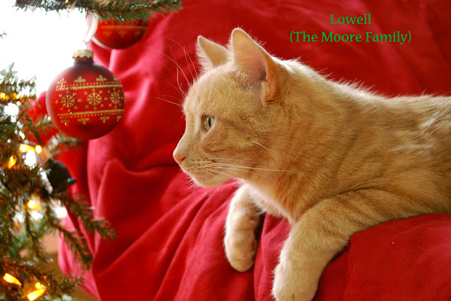 Orange cat in Christmas decorations