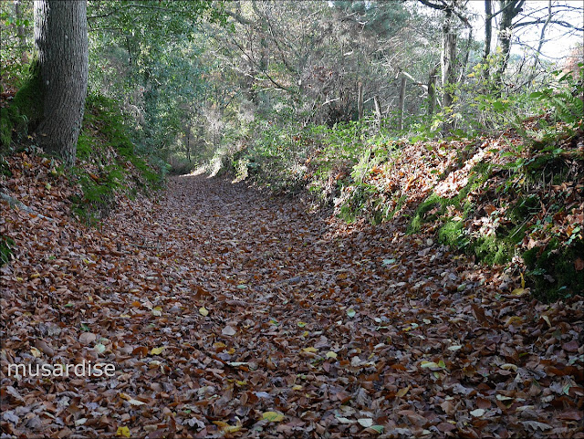 Chemin creux en pays de Vilaine, à Renac. Il va vers le moulin Saint-Julien