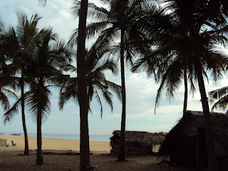 Coconut trees at kallady beach SriLanka