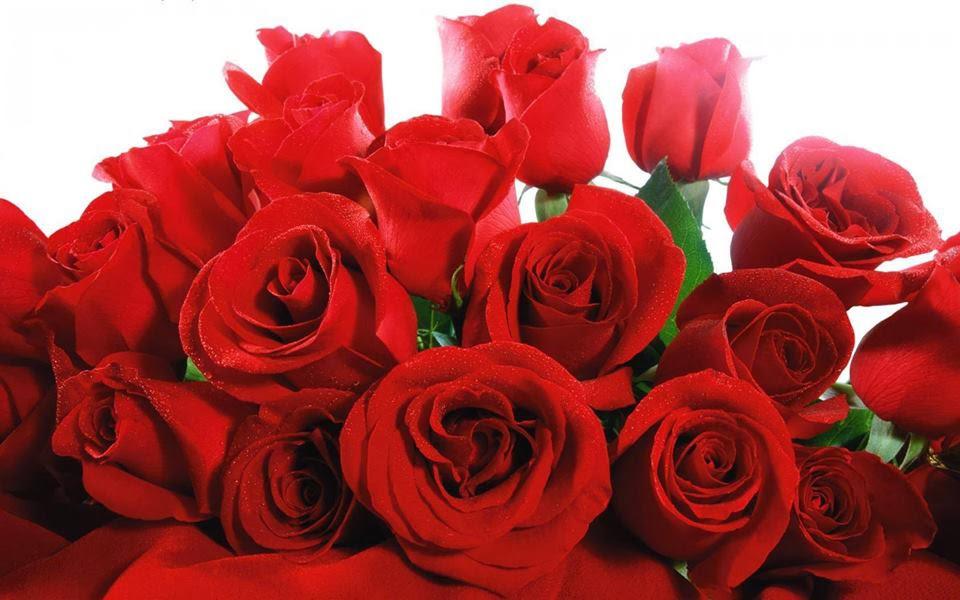 nice image rose wallpaper
