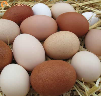 As opposed to blood spots, which occur on the surface of an egg yolk, meat spots are found in the egg white (albumen). Meat spots are the result of a small piece of the oviduct sloughing off as egg white is being added in the egg-making process.