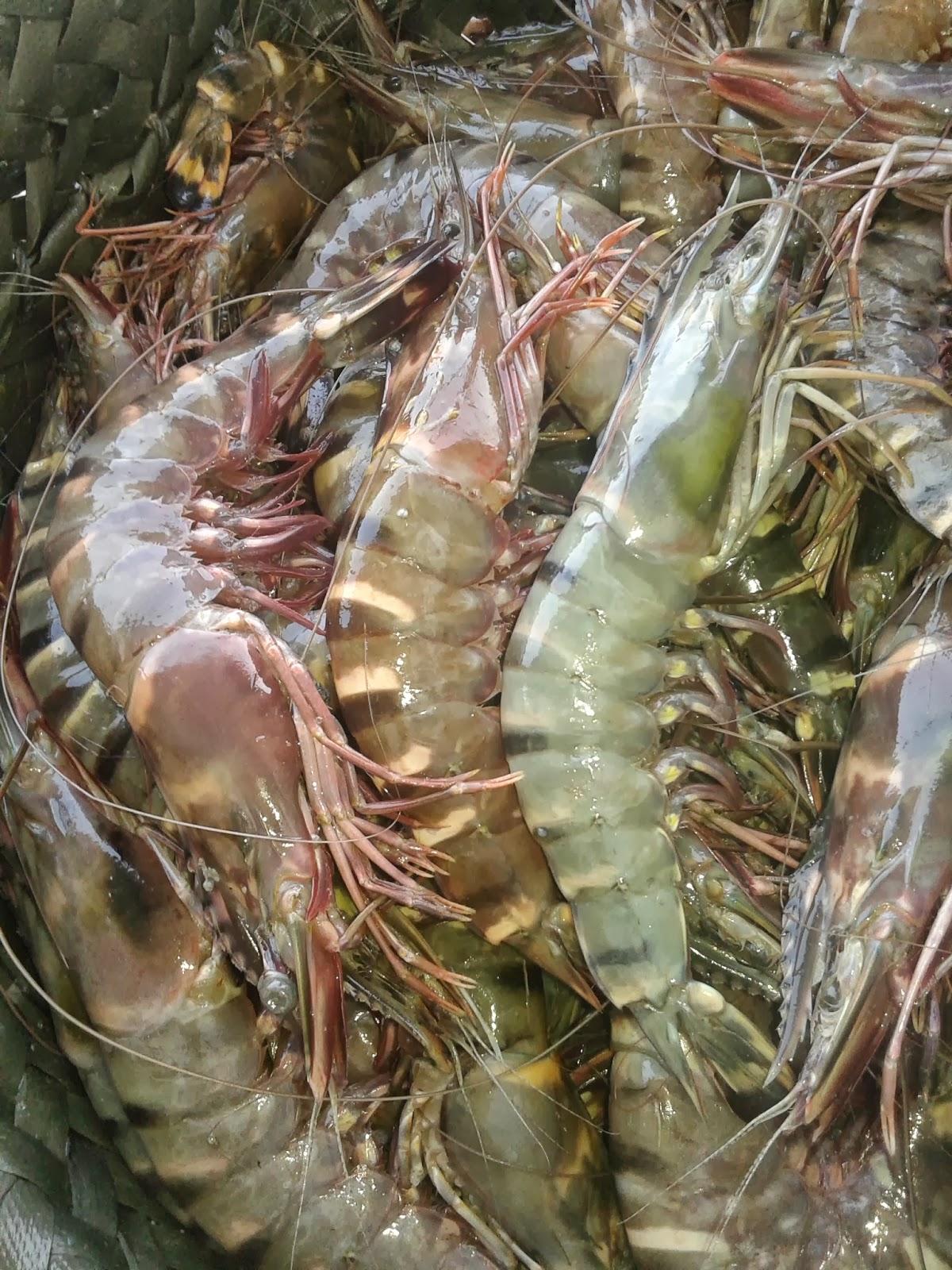 Sea foods october 2013 for Kumak s fish