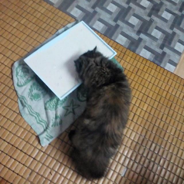 Royal Cat S Blog Resipi Mudah Homemade Wetfood Untuk Kucing