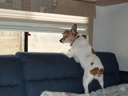 Gus is a real people watcher
