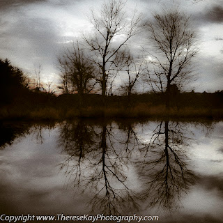 sepia photograph of two trees reflected in the water in winter