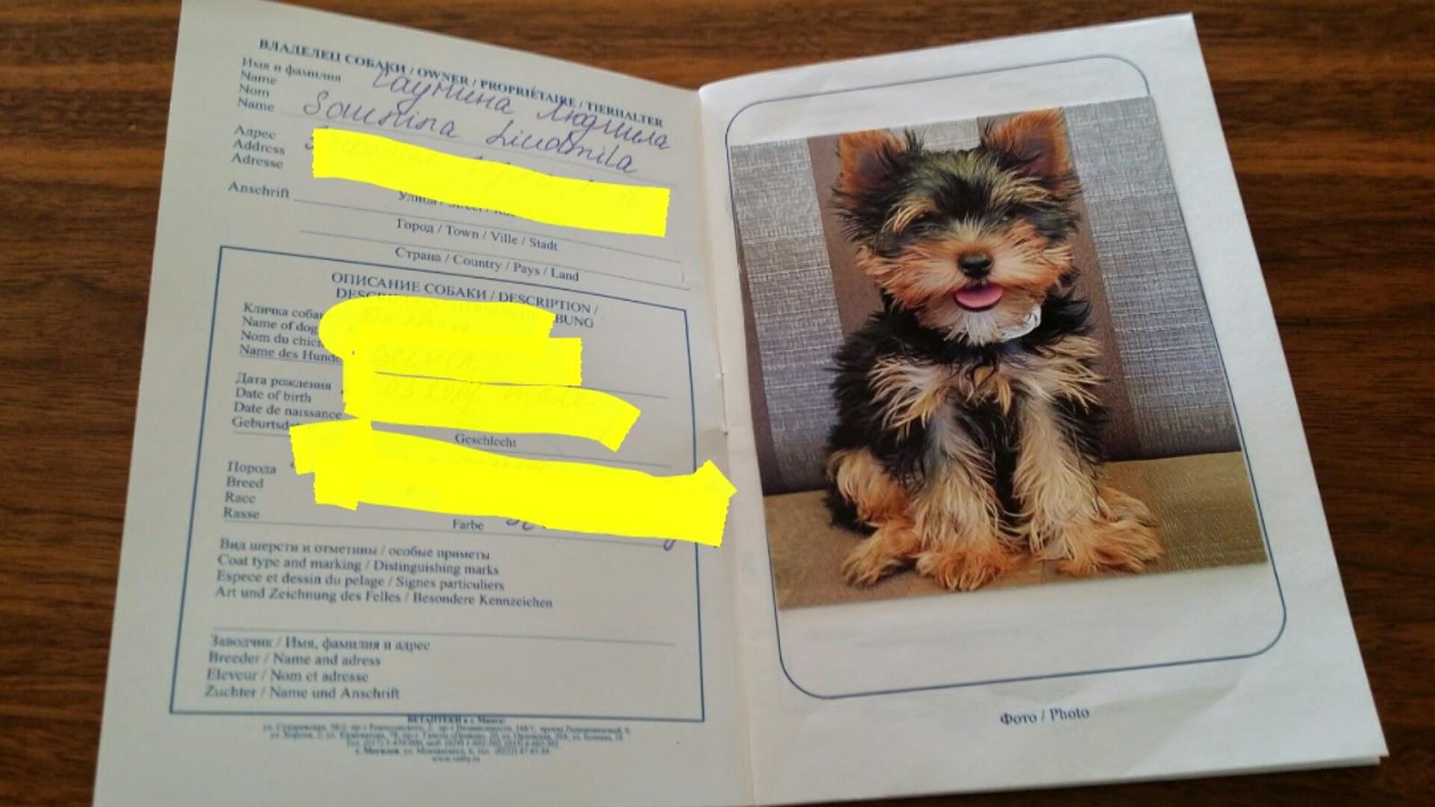 какое должно быть фото на паспорт