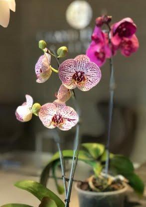 Abonos Florales a Domicilio