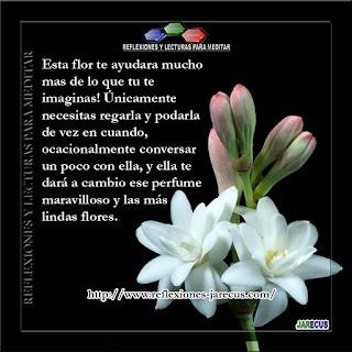 amigos, familia, flor, hijos, marido, Reflexiones de Familia,