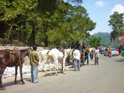 Horse Riding in Kodaikanal