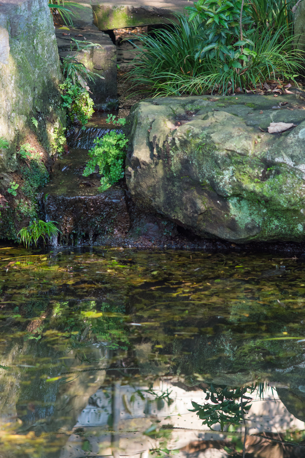 貫井神社の池に流れ込む湧水の写真