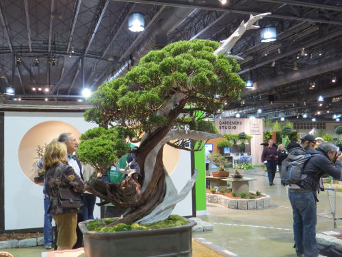 Philadelphia Flower Show Bonsai