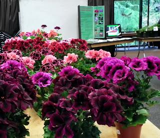 Plant Sale of Canadian Geranium and Pelargonium Society