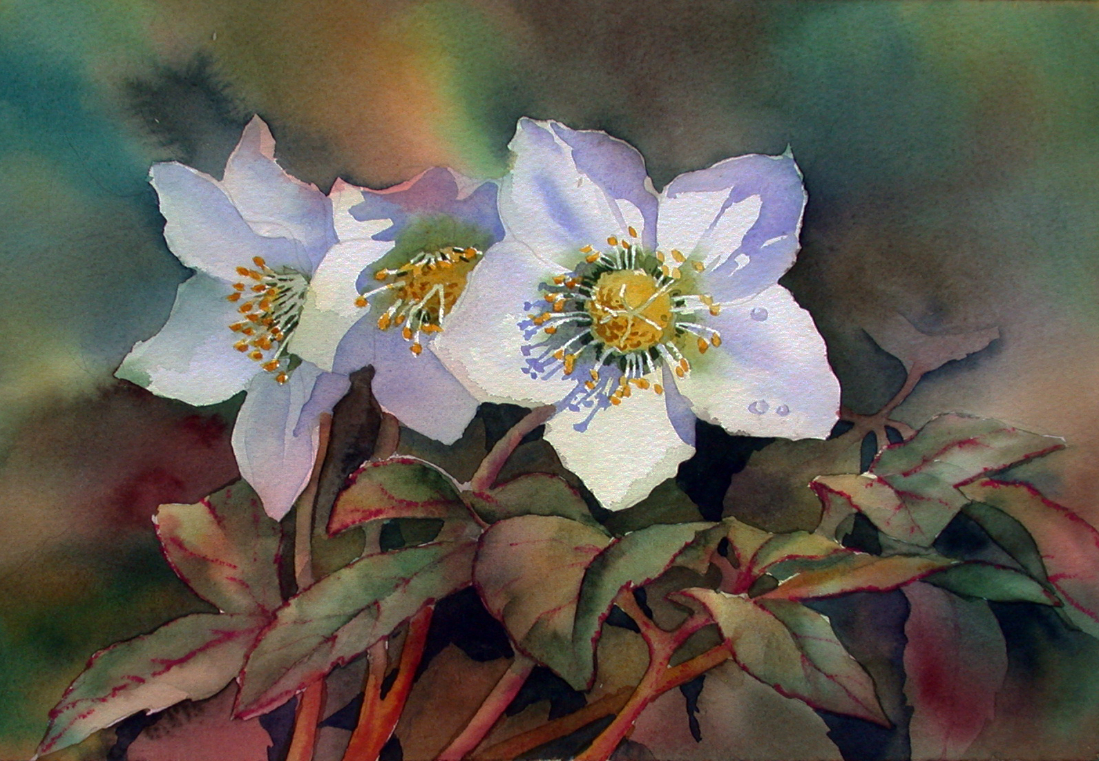 Anns watercolour studio painting shadows on white flowers hellebores by ann mortimer mightylinksfo