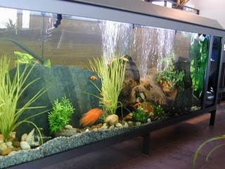 Beautiful Fish Aquarium