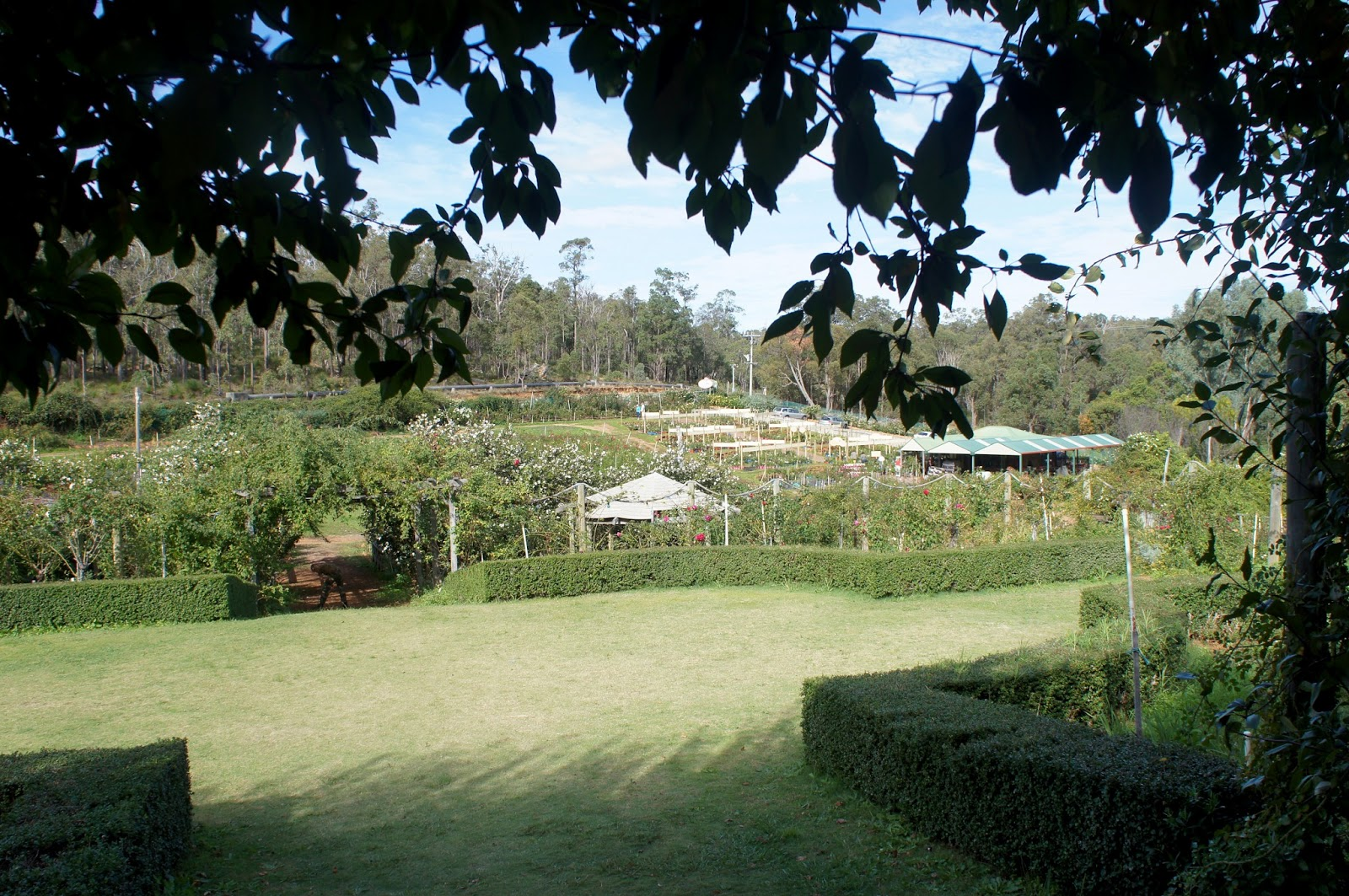 Rose Heritage Cafe Perth Hills