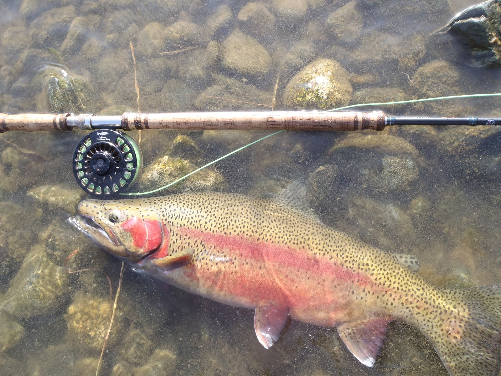 Irideus fly fishing products steelhead flies for 2012 for Steelhead fly fishing