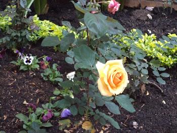 Las flores del Jardín que cuidan tanto nuestras Hermanas