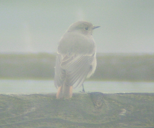Fog Is Often Photographed In Black And >> MERSEA WILDLIFE: THROUGH THE FOG
