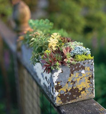 Hướng dẫn trồng cây trang trí mà không cần chăm sóc nhiều