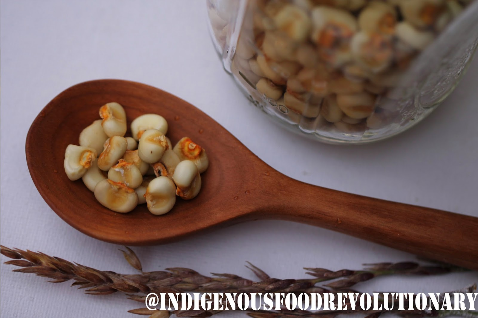 Indigenous food revolutionary iroquois white corn project food shoot forumfinder Image collections