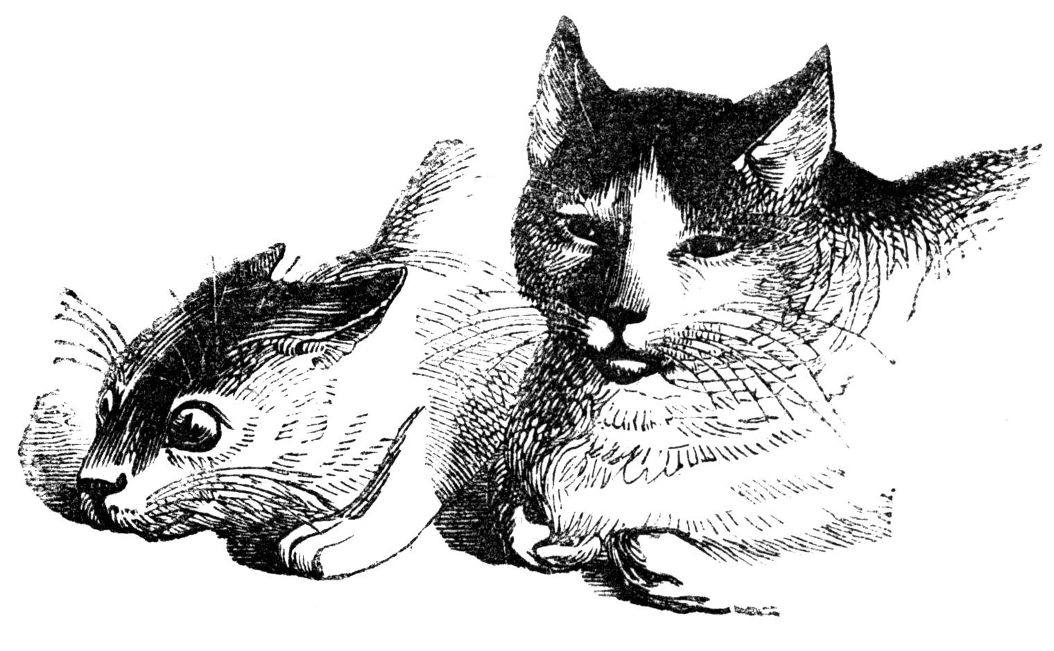 http://1.bp.blogspot.com/-CToPguXHWJ0/VLPiS-qQ--I/AAAAAAAAPbw/C5kHwjrj0DQ/s1600/two%2Bcats.cv.jpg