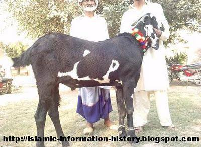 Muhammad Writen on goat skin