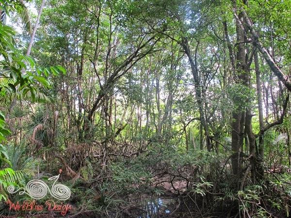 Bako National Park - Mangrove - WireBliss