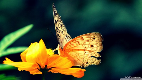 Beautiful Butterfly Sitting on Colorful Flower HD Images