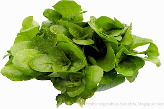 benefits_of_eating_watercress_fruits-vegetables-benefits.blogspot.com(6)