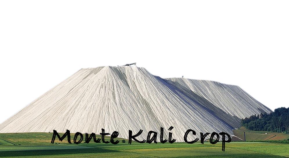 1. Monte Kali Crop