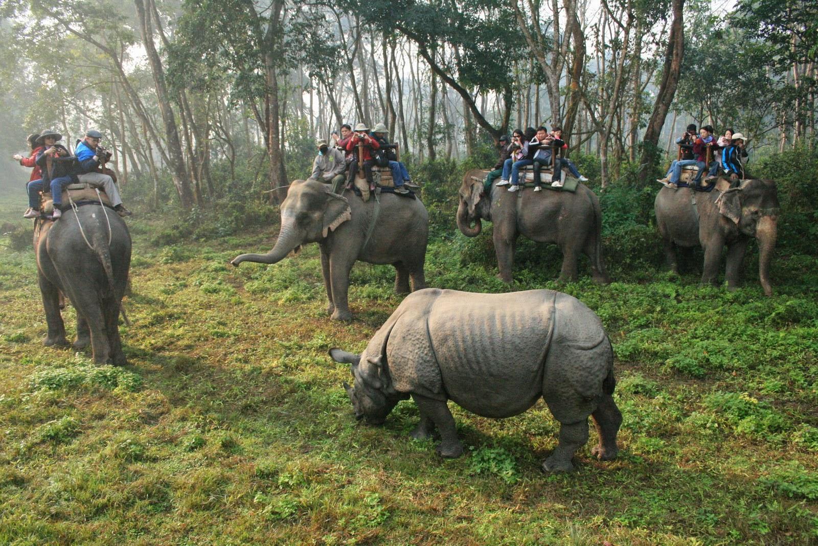 jungle safari tours in chitwan national park