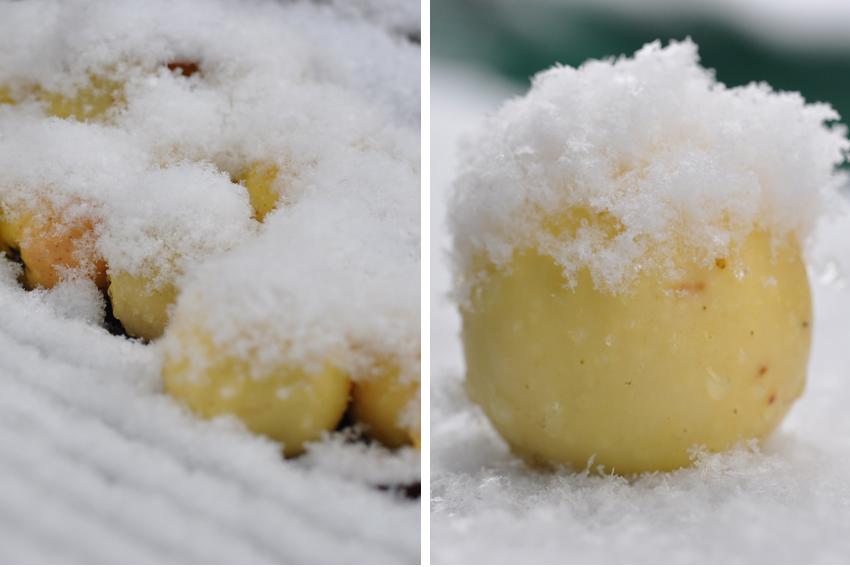 Die Kuchenschabe Apfel Mit Schneehaubchen
