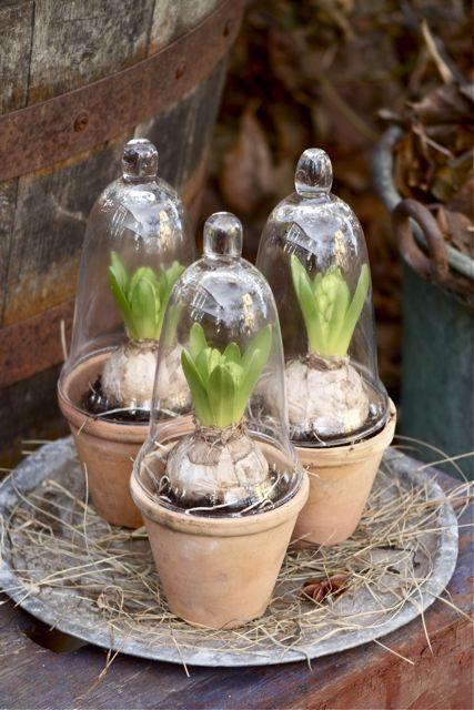 tuindesign  leuke decoratie ideeën met hyacinten, Meubels Ideeën