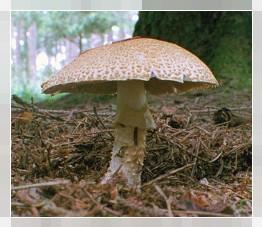Disinfezione da un fungo di unghie e piedi