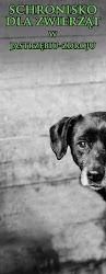 Psy czekają na nowe domy!