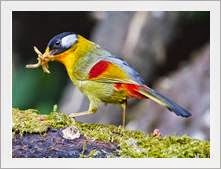Burung bersayap berwarna warni