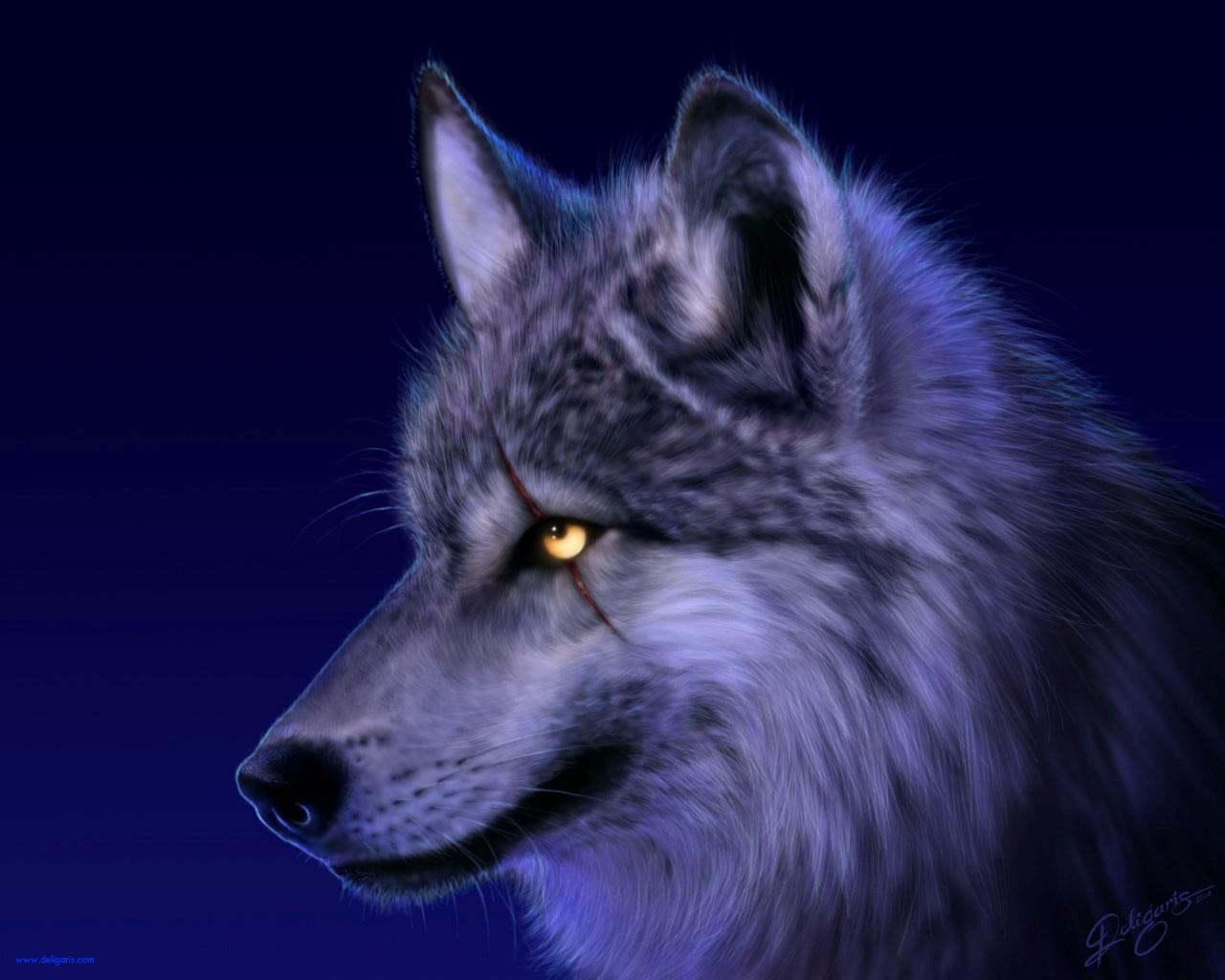 HD Wallpapers Wolf Widescreen