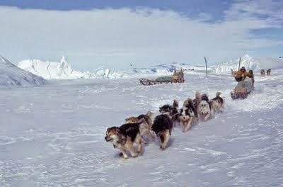 Image Result For Dog Training Port