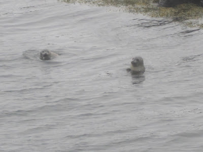 Seal watching in Iceland, Iceland