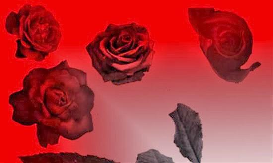 Rose Brushes Set CS2 for Photoshop