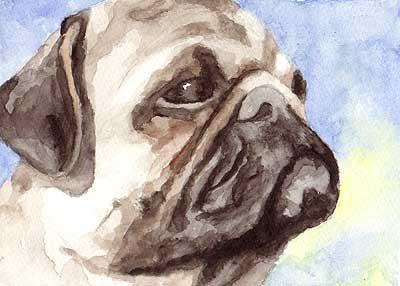 watercolor pug portrait