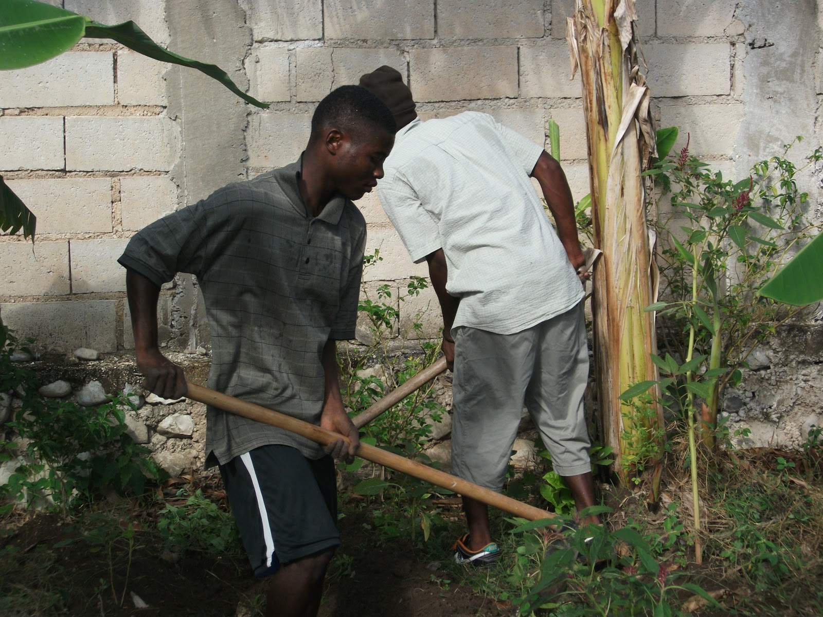 Action ha ti projets maryse novembre 2012 - Nettoyage du jardin ...