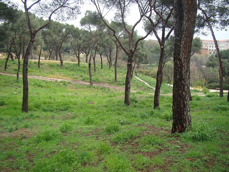Parque Dehesa de la Villa en Madrid. Ocio verde en Madrid.
