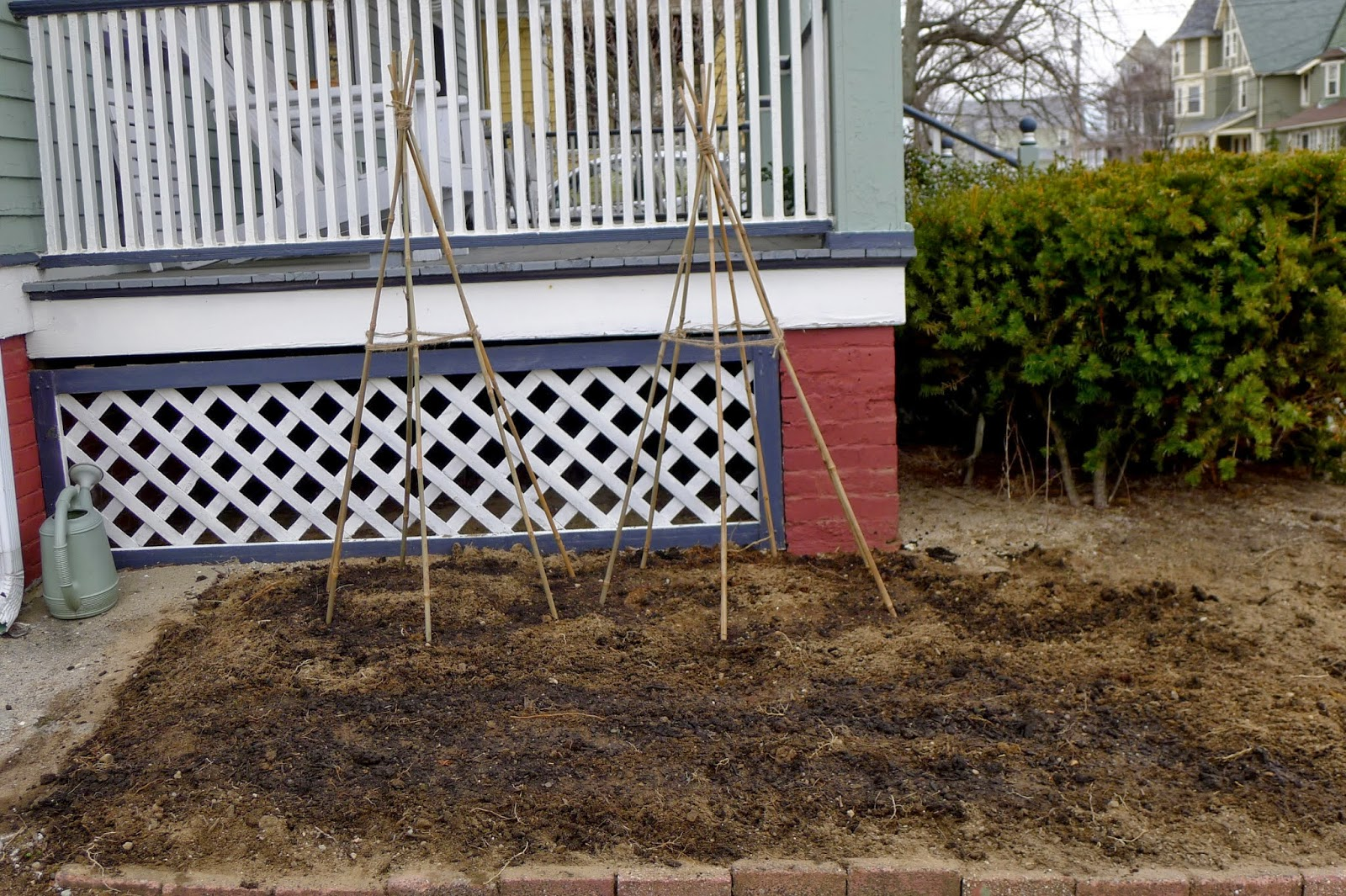 planting peas, edible landscaping