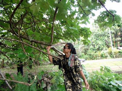 Roxann ethnobotanical gardening in style