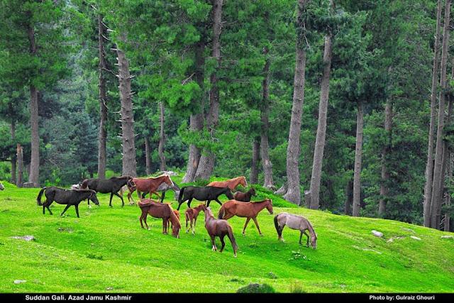 Foto Lembah Indah Indah @ Digaleri.com